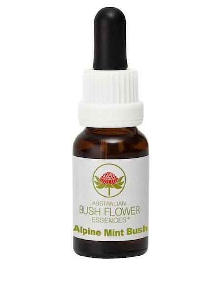 Bush Australien Alpine Mint Bush